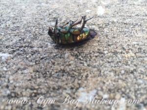 beautiful_dead_bug_2