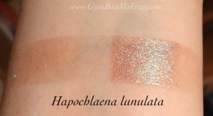 aromaleigh_hapochlaena_lunulata_isi