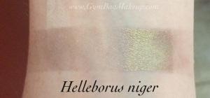 aromaleigh_helleborus_niger_indoors
