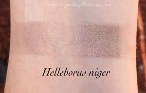 aromaleigh_helleborus_niger_is