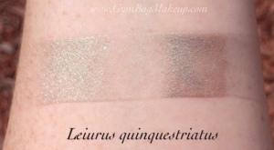 aromaleigh_leiurus_quinquestriatus_ds