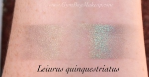 aromaleigh_leiurus_quinquestriatus_is