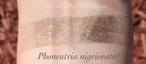 aromaleigh_phoneutria_nigriventer_ds