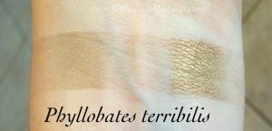 aromaleigh_phyllobates_terribilis_al