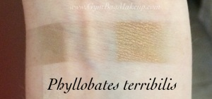 aromaleigh_phyllobates_terribilis_indoors
