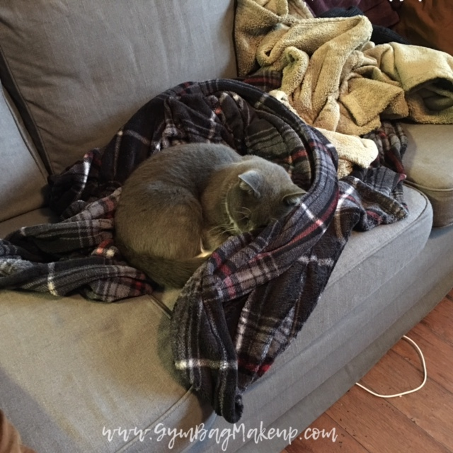 assistant_cat